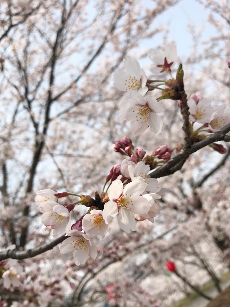 春の定期ハガキ