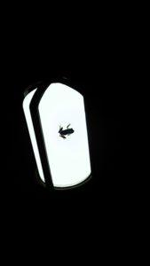 街灯に貼り付く蛙